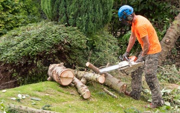 additional services offered by Irvine tree surgeons