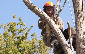 finding qualified Irvine tree surgeons