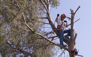 reasons to consider Irvine tree surgery