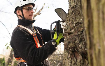 Irvine tree surgery costs